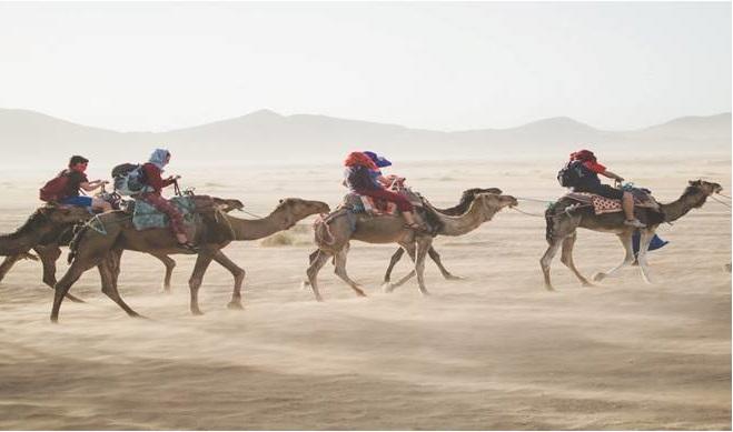https://unsplash.com/search/camel?photo=oJofV8dZd_w